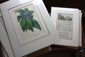 antique-prints