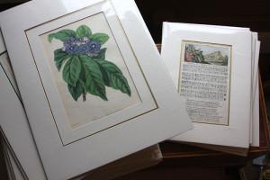 antique-prints