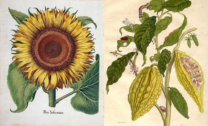 Antiques – The Beauty of Botanicals